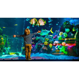 Club Clipsal Generator Rewards - Aquarium